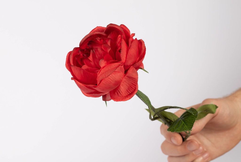 Red rose in hand (Flip 2019)