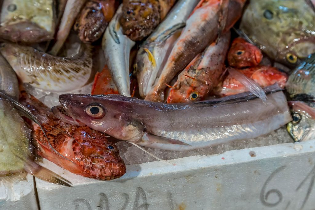 Red scorpionfishes, hake and other fishes on fish market