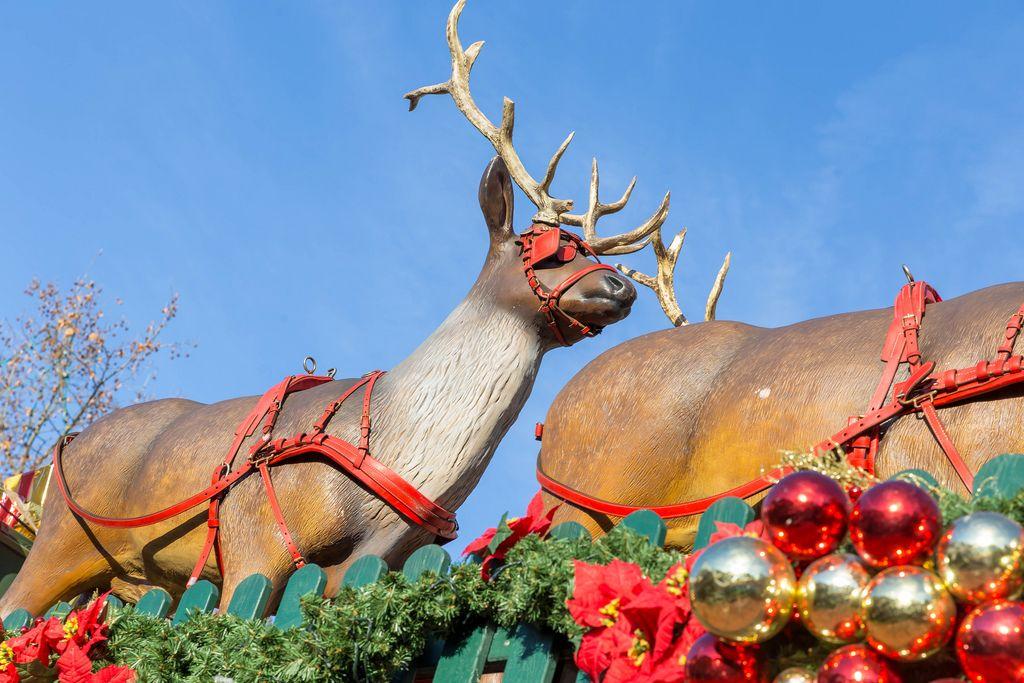 Rentiere mit rotem Schlittengeschirr vor weihnachtlichem Zaun am Rudolfplatz in Köln