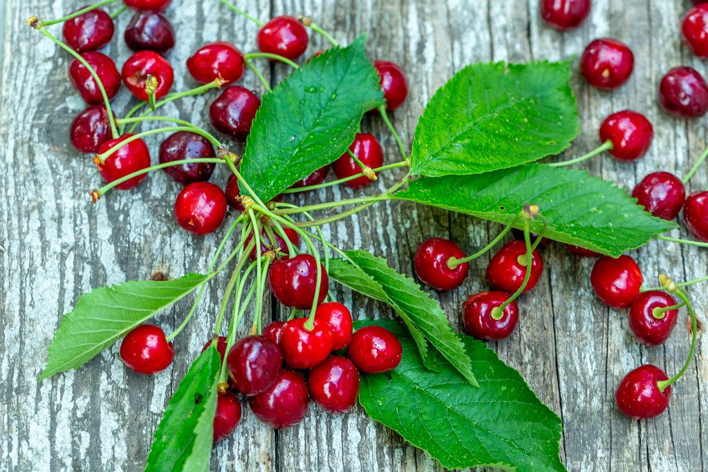 Ripe cherries with leaves on old wooden background