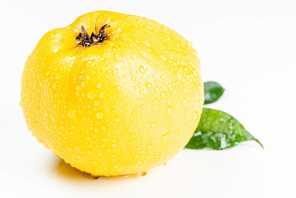 Ripe yellow quince with water drops on a white background