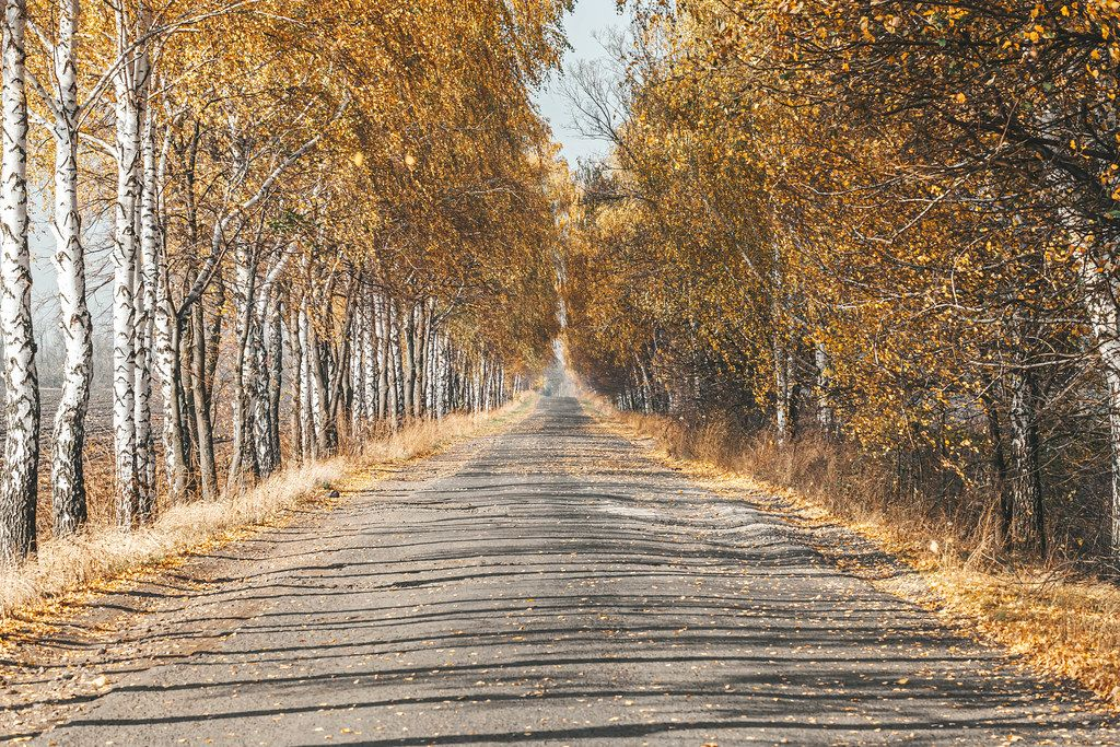 Road with autumn landscape of trees and yellow leaves