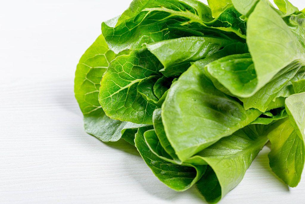Romaine lettuce leaves closeup