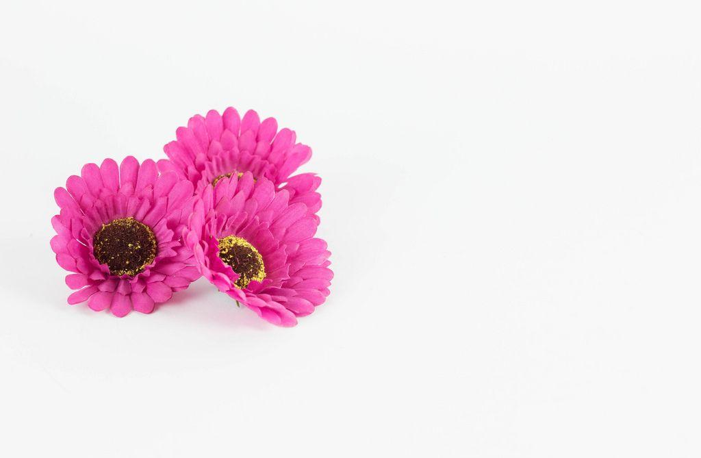 Rosafarbene Blumen vor weißem Hintergrund