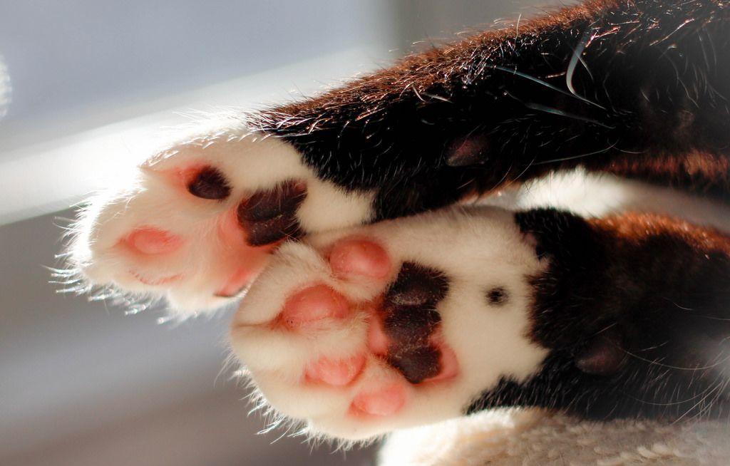 Rosafarbene Katzenpfoten