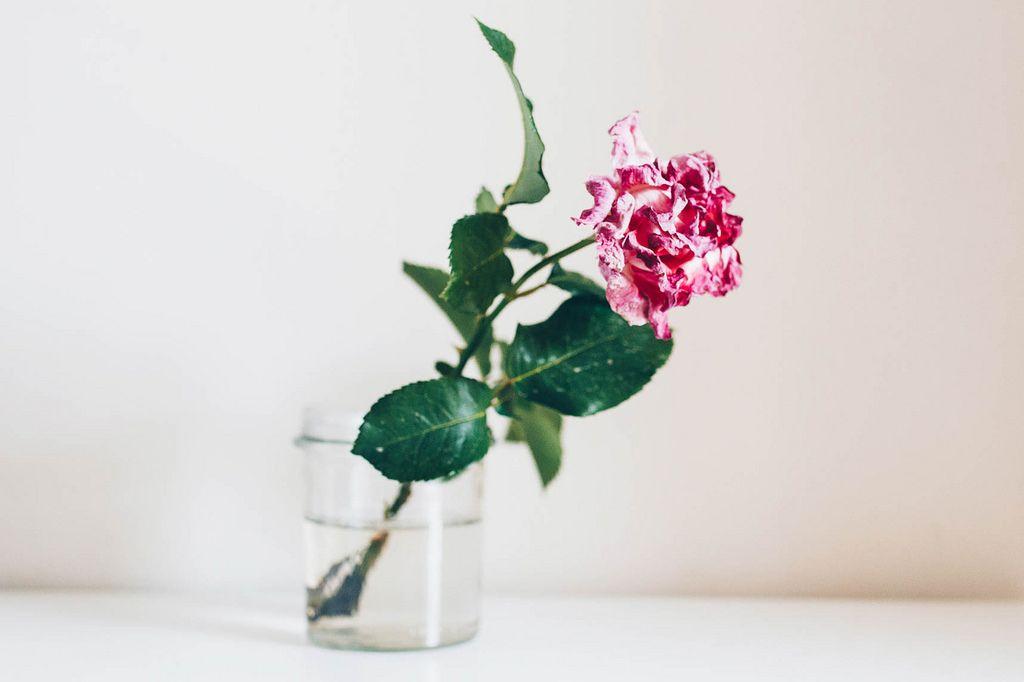 Rose im Wasserglas