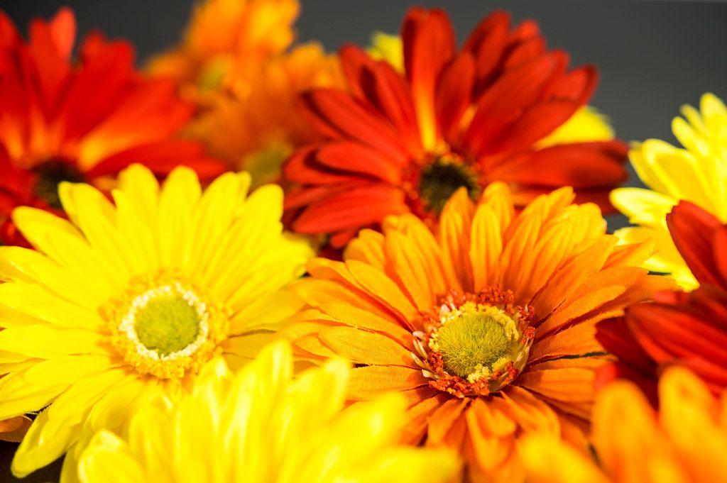 Rote, gelbe und Orange Kunstblumen in der Nahaufnahme