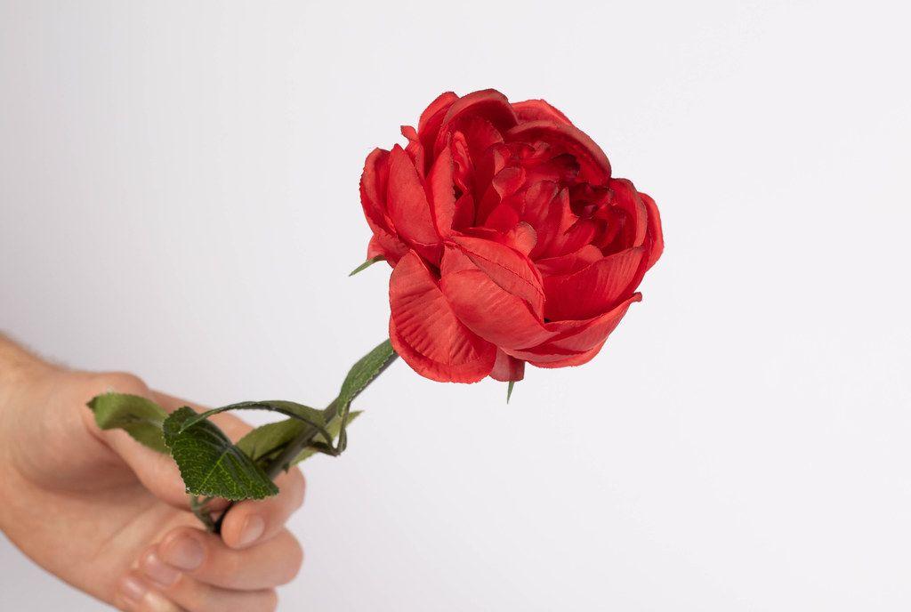 Rote Rose in einer Hand