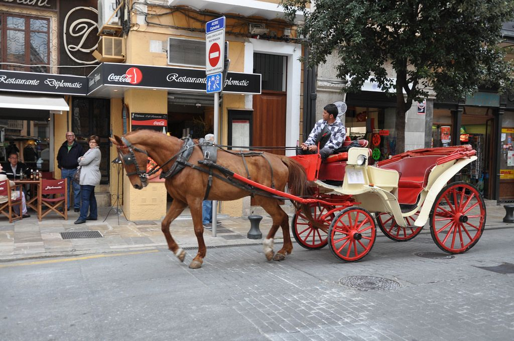 Roter Fiaker auf Mallorca