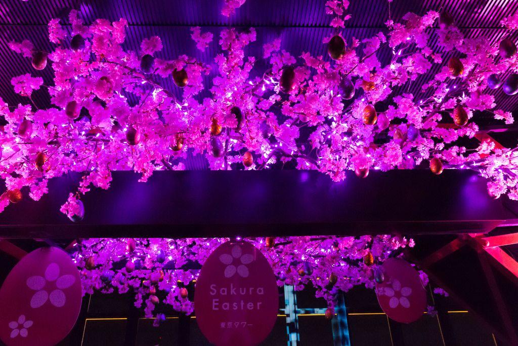 Sakura Easter, Tokyo