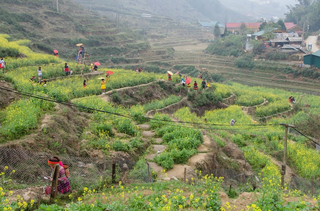 Sapa ricefield with womens in traditional clothes  (Flip 2019)