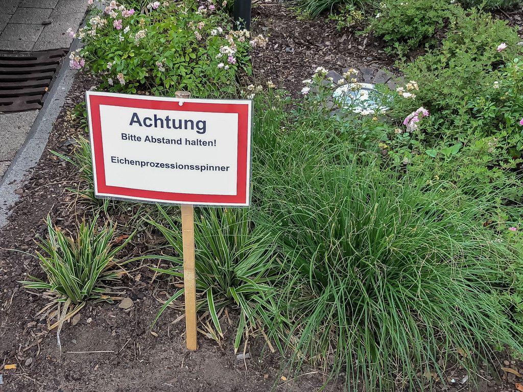 Schild warnt vor Eichen-Prozessionsspinner