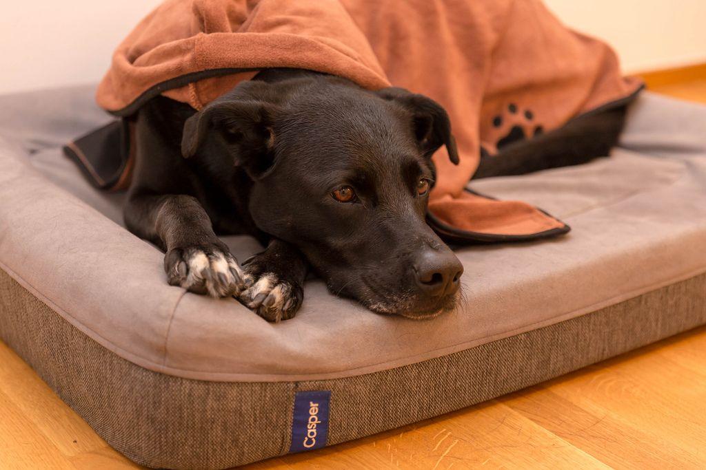 Schwarzer Hund macht es sich auf Hundekissen gemütlich, warm gehalten von oranger Hundedecke