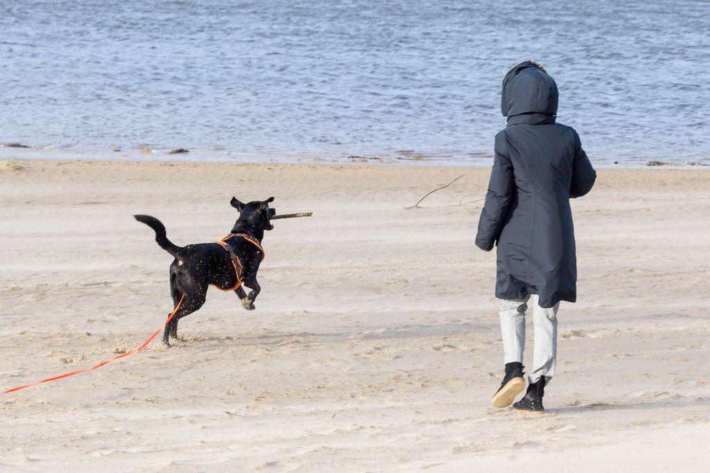 Schwarzer Labrador schnappt sich einen Ast mitten in der Luft