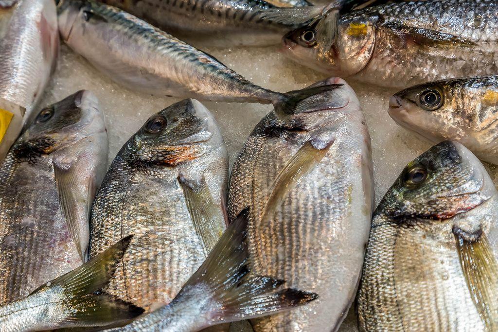 Sea breams on fish market