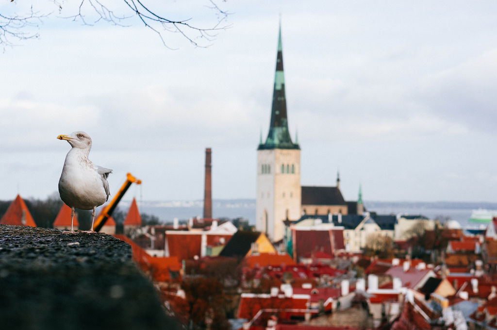 Seagull looking over City / Möwe Blick über Stadt