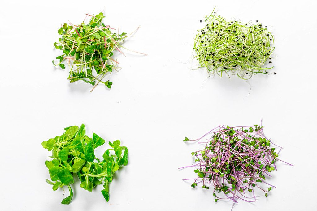 Set of sprouted micro-greens of onion, cabbage, radish and corn salad on white background. Top view (Flip 2019)