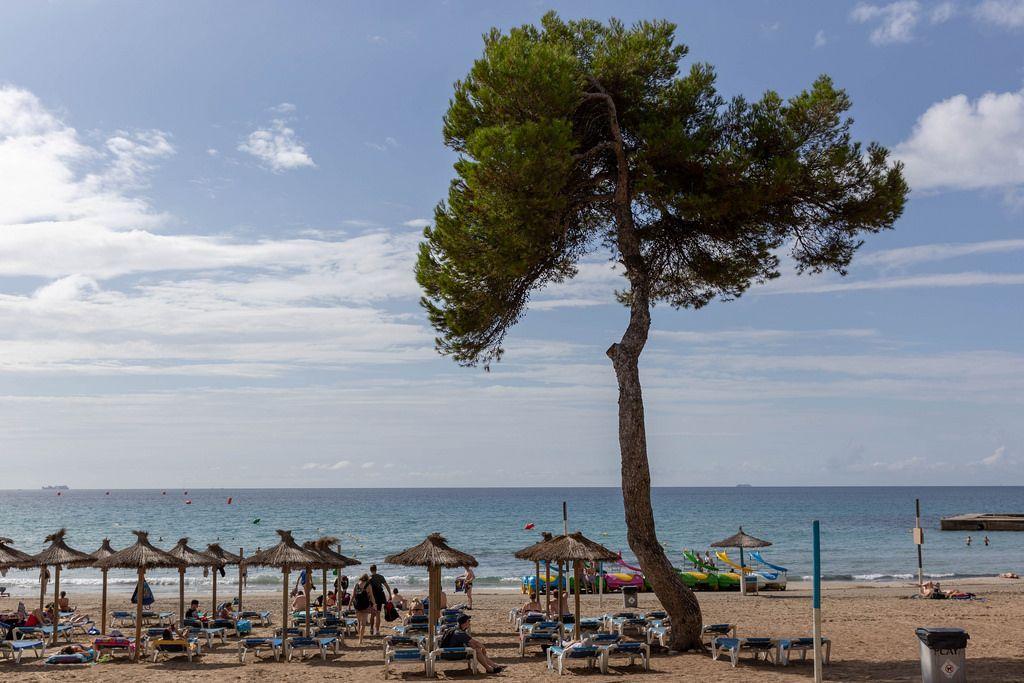 Sicht auf den Strand mit Sonnenschirmen in Peguera auf Mallorca