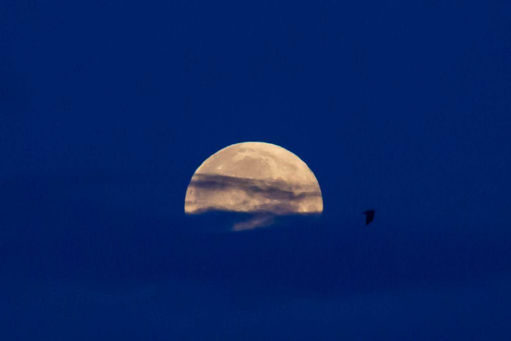 Silhouette eines Vogels am Himmel bei Vollmond