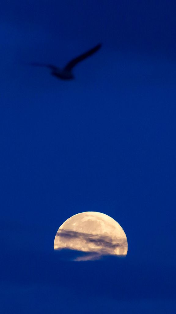 Silhouette of a bird in the sky above the full moon