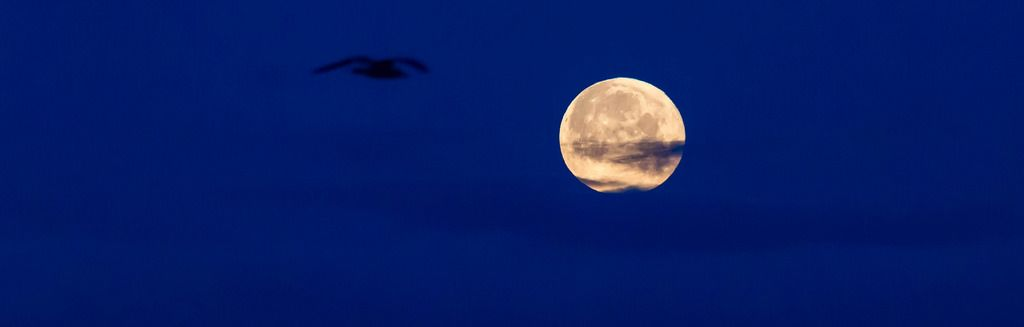 Silhouette of a bird in the sky and full moon