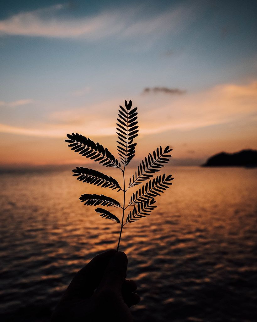 Silhouette of a small plant during sunset