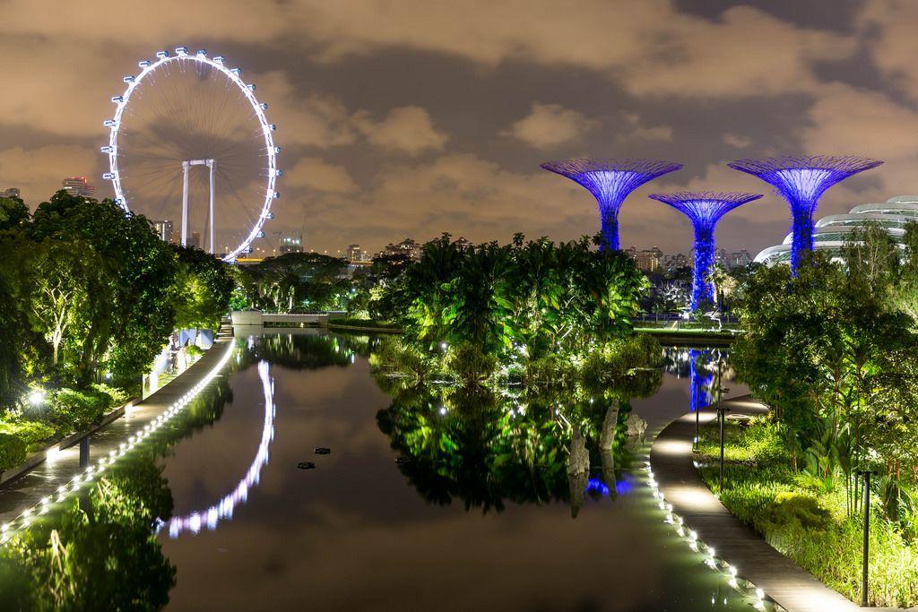 Singapur Flyer (big wheel) und Supertree Grove at Night