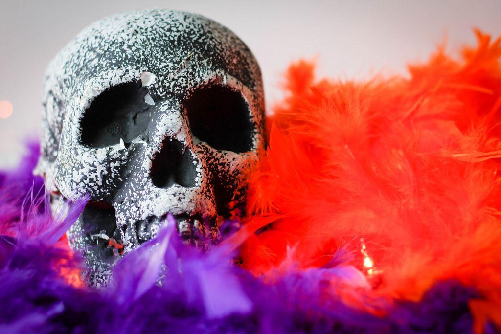 skeleton skull close-up