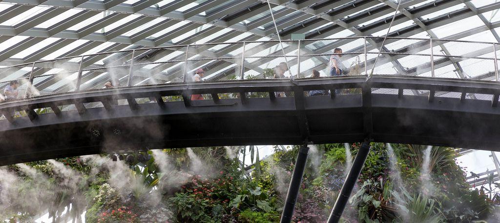 Skywalk in Cloud Forest