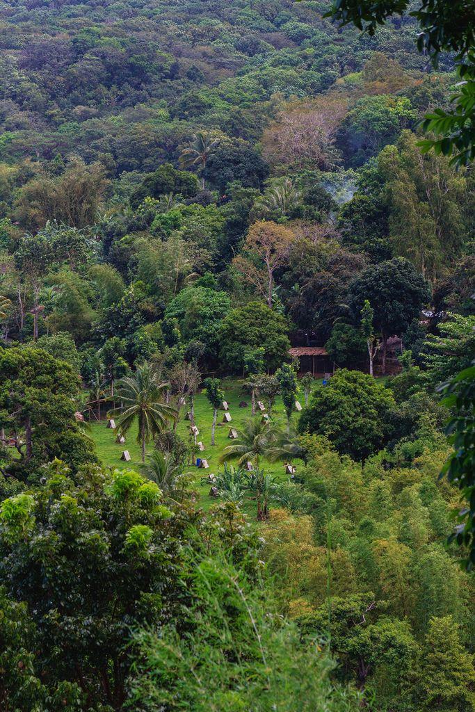 Small farm for fighting cocks in Don Salvador (Flip 2019)