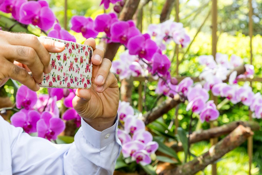 Smartphone Photo of Flowers