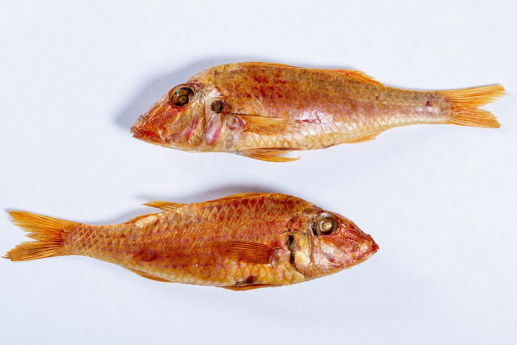 smoked Surmullet fish, white background.