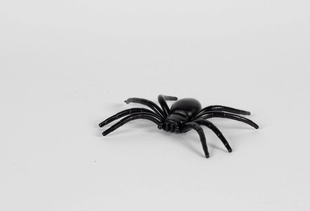 Spider on white background - Creative Commons Bilder