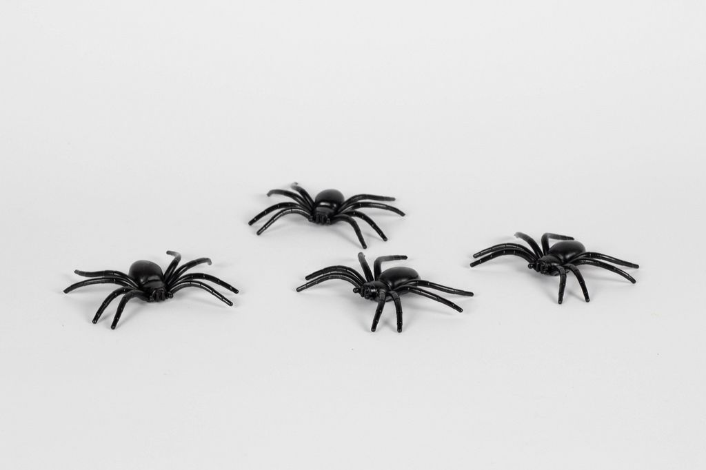 Spiders on white background
