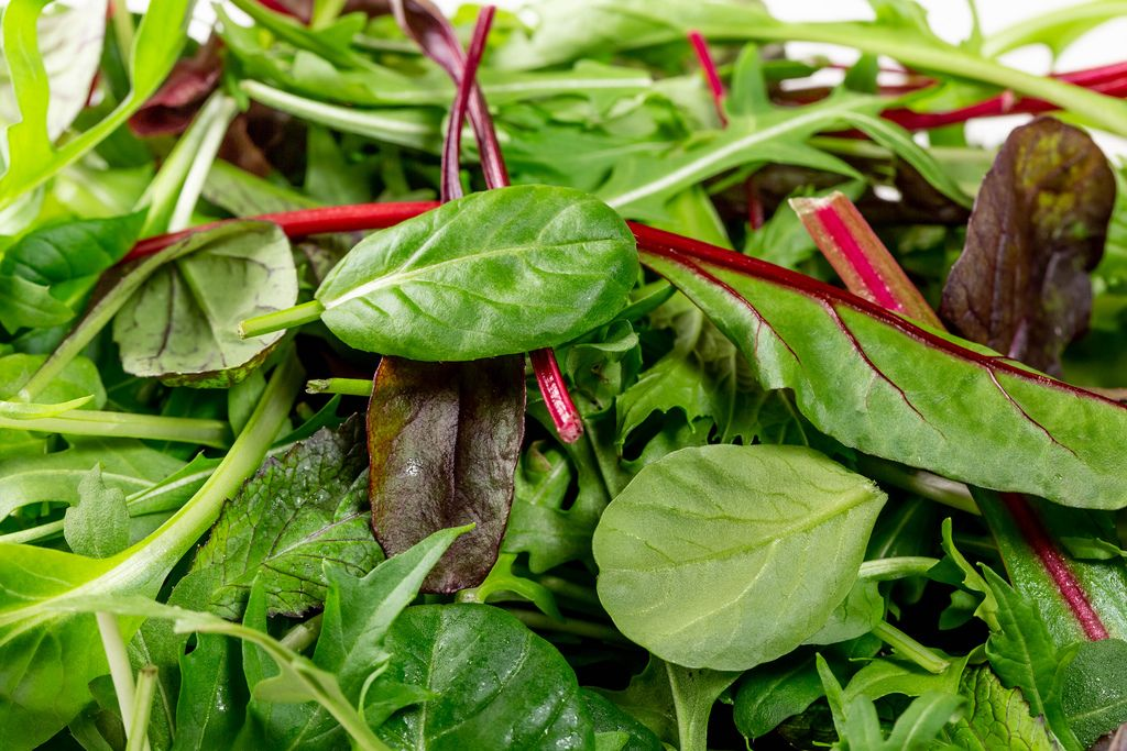 Spinach, chard, lettuce and rucola close up