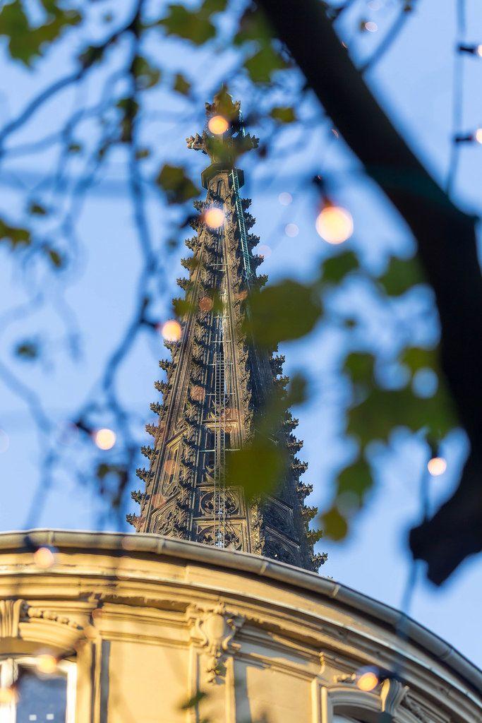 Spitze des Kölner Doms mit einem Baum im Vordergrund