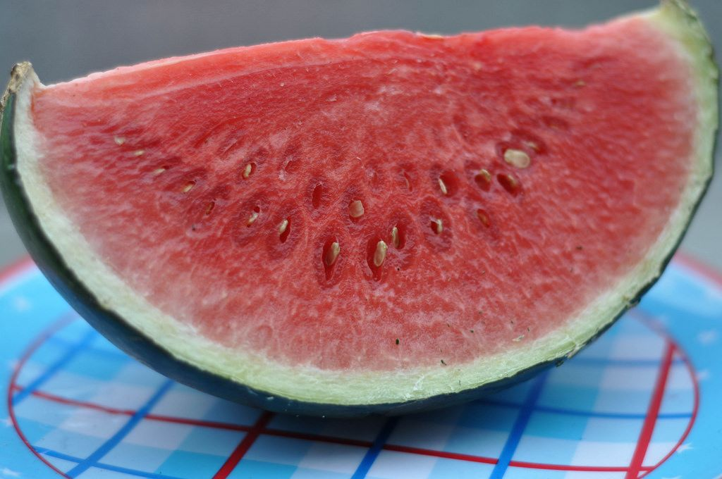 Spoiled water melon