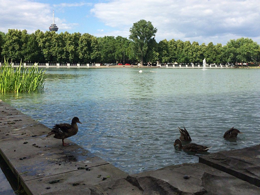 Summer Photo of Aachener Weiher Pond with Ducks in Cologne, Germany