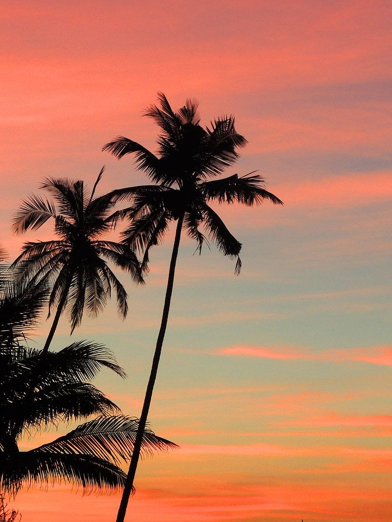 Sunset Photo of Palm Tree Shadows at the Beach with Red Sky in Goa, India
