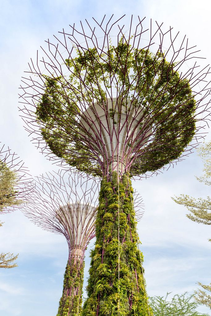 Supertree Grove during Daylight