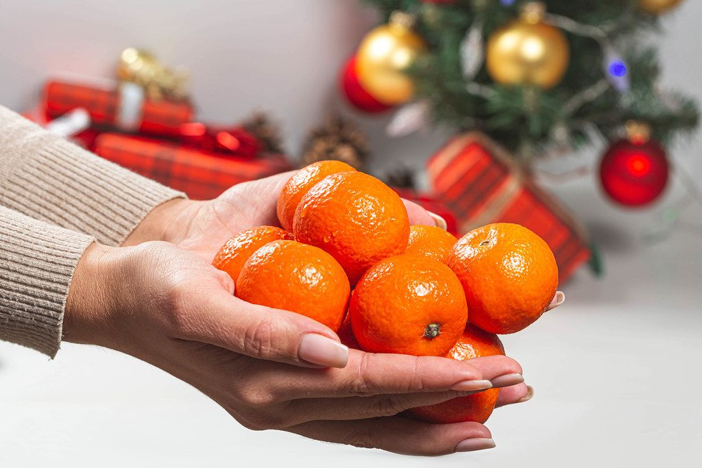 Tangerines in women's hands on the background of a Christmas tree