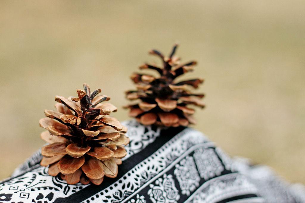 Tannenzapfen (engl. Fir Cones)