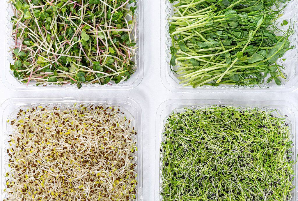 The view from the top micro greens onions, alfalfa, radish and peas. The concept of healthy food (Flip 2019)