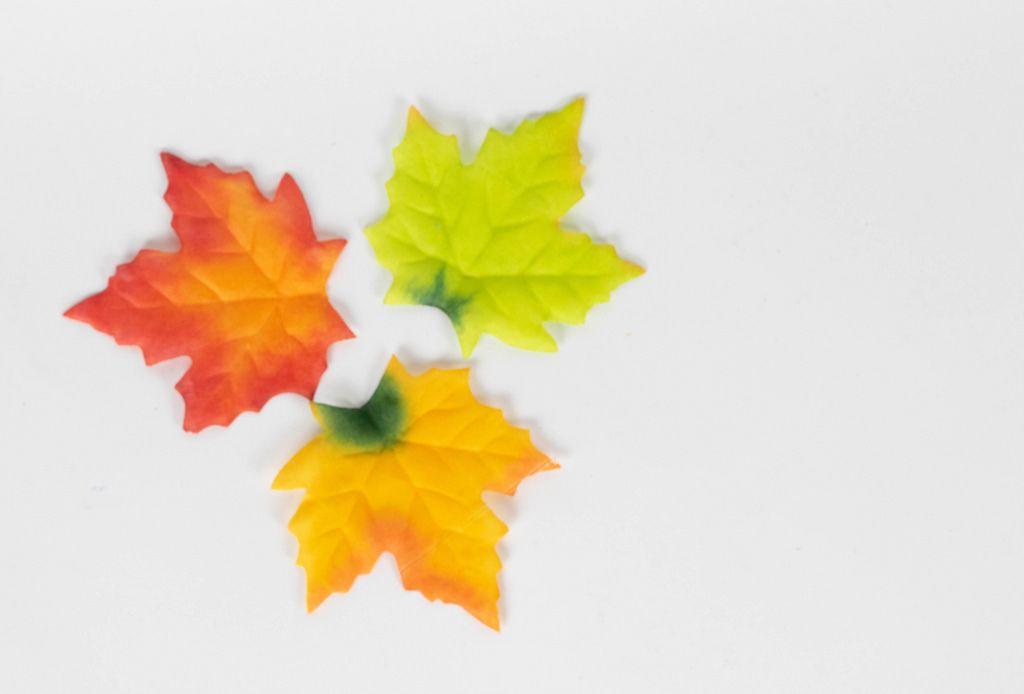 Three maple autumn leaves