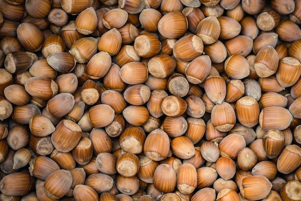 Top View Background Photo of many Hazelnuts