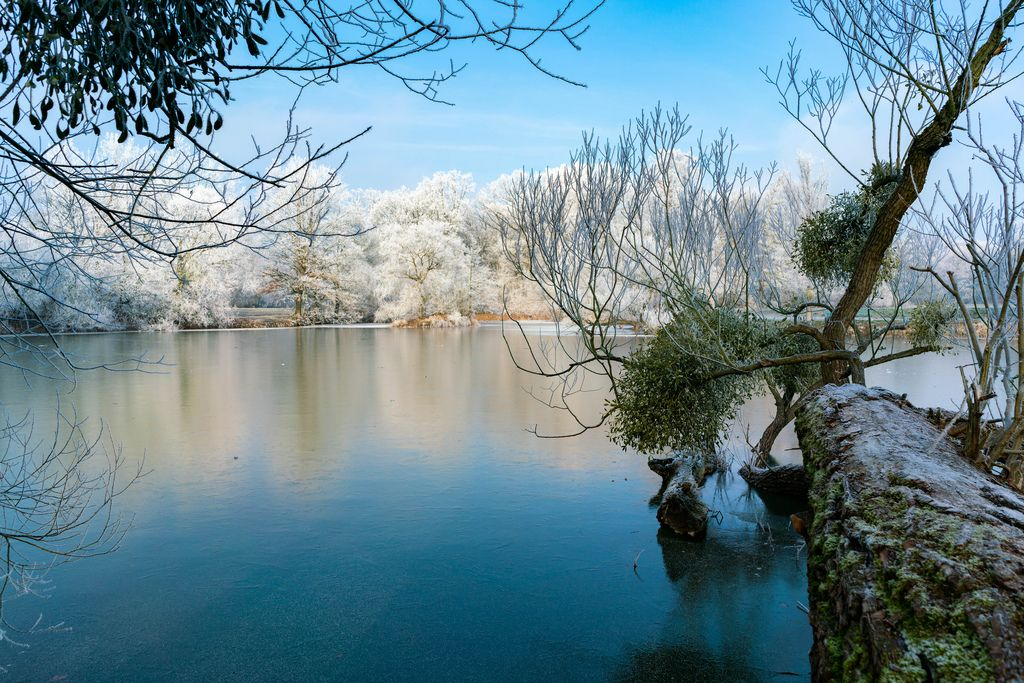 Tree branch hanning above the frozen lake and forest covered in snow