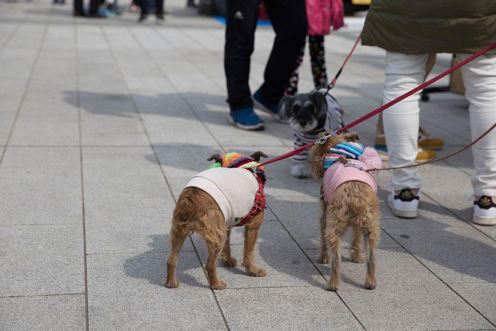Trendy Hunde, Tokyo
