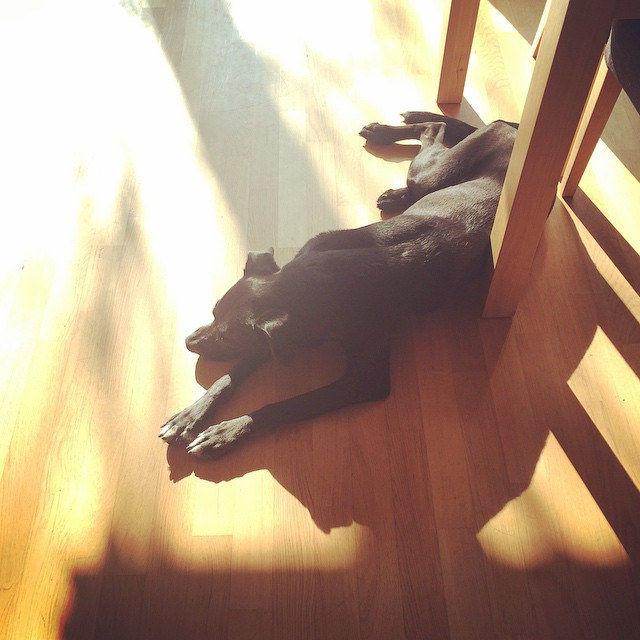 Treuster Freund der Welt. 🐶☀️#intothesun #summer #sun #picoftheday #instapic #happy #sleepy #puppy #laboftheday #lab #shadow