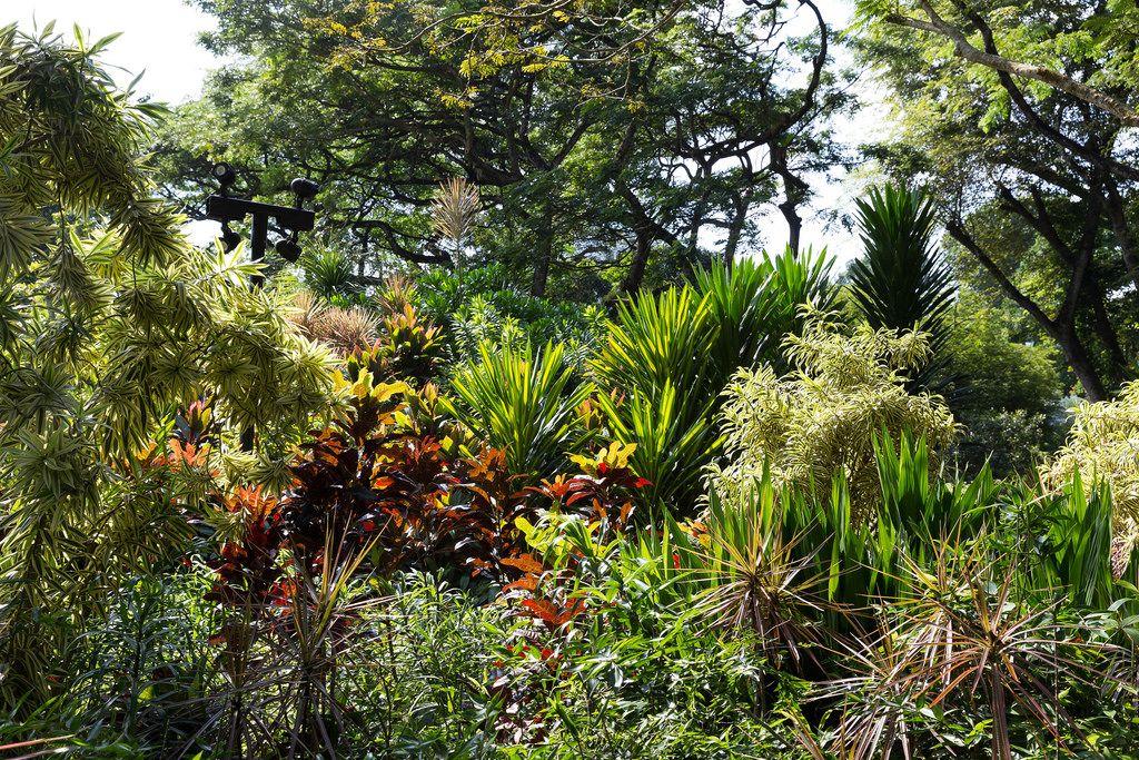Tropischer Garten in Singapur