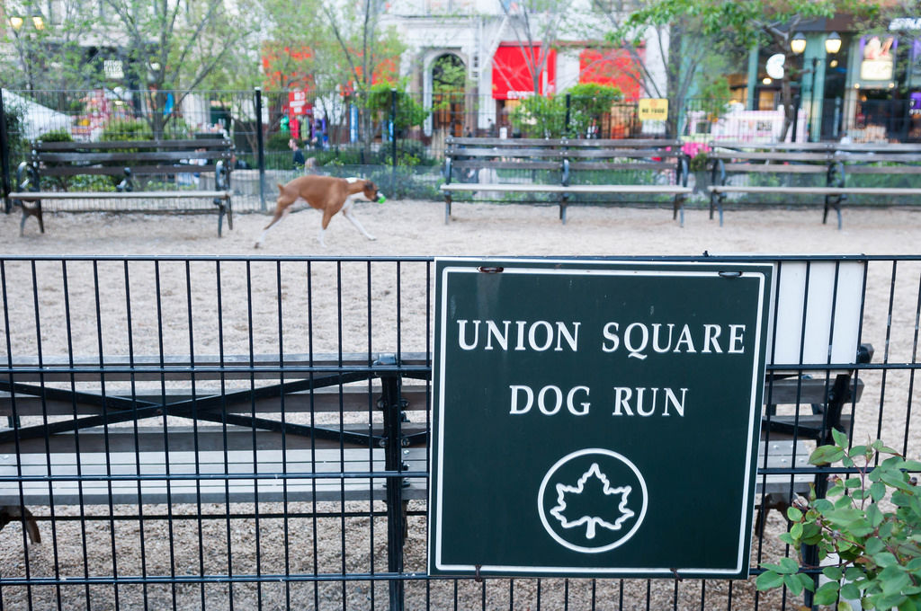 Uniion Square Dog Run